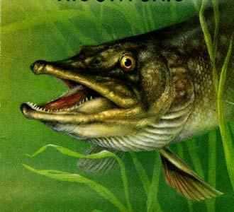 прикормки для рыб в минске