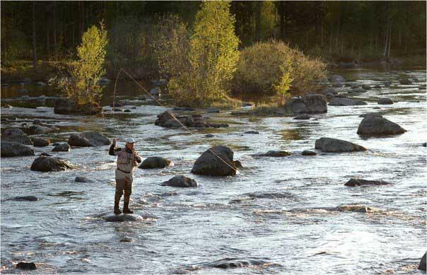 как равным образом  сверху который искать рыбу во  финляндии